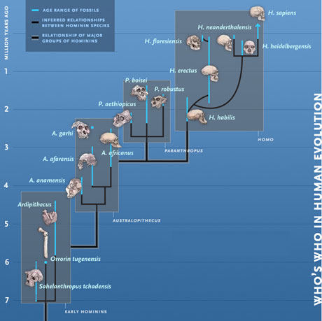 Who's Who in Human Evolution