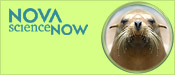 NOVA scienceNOW: Smart Sea Lions and Talking Walruses