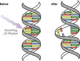 DNA_UV_mutation.jpg