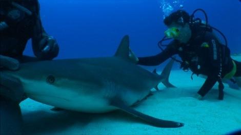David and shark.jpg