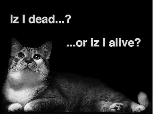dead_or_alive.jpg