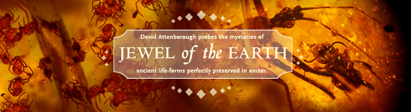 Jewel of the Earth: David Attenborough probes the mysteries of ancient life-forms perfectly preserved in amber.