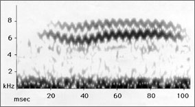 Spectrogram of black and white warbler call