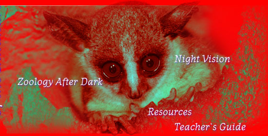 Night Creatures of the Kalahari (see bottom of page for text navigation links)