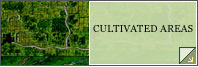 Cultivated Areas