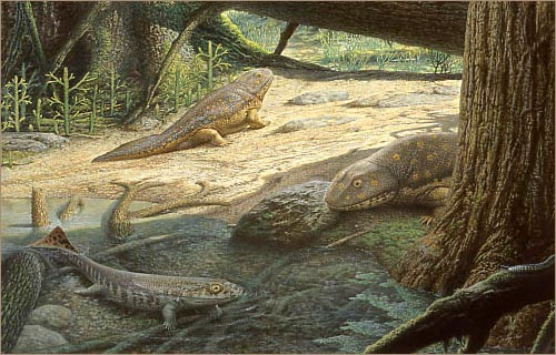 Pictures of the Devonian Period http://www.pbs.org/wgbh/nova/link/hist_05.html