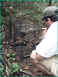 Luke Dollar and caged fossa