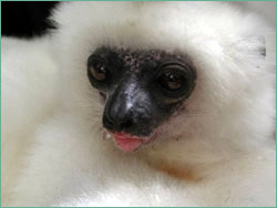 Silky with drop of water