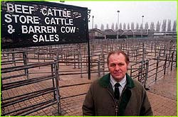 British cattle pens