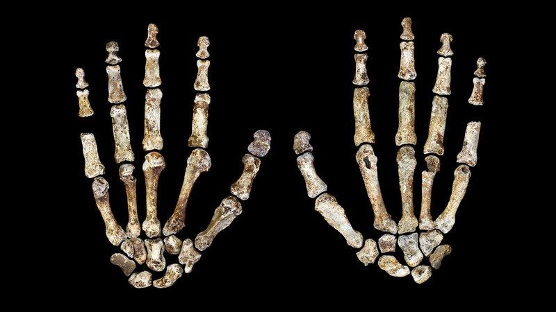 05-homo-naledi-hand-1-figure-peter-schmid-cc-by