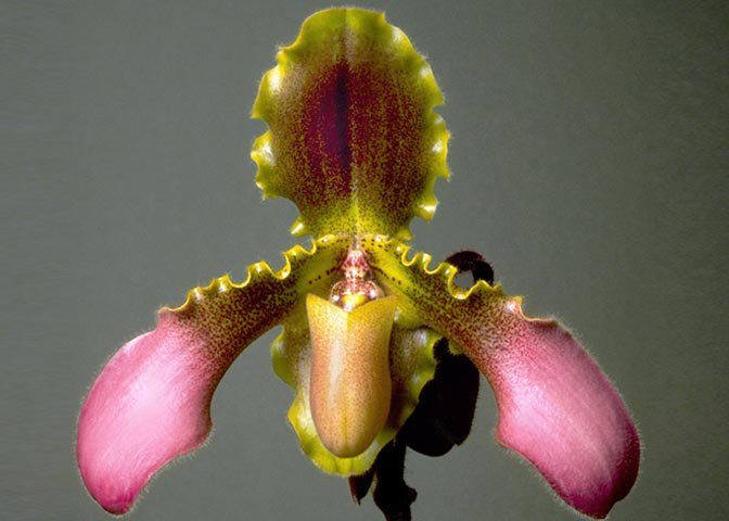 plant-smarts-image-02-large.jpg