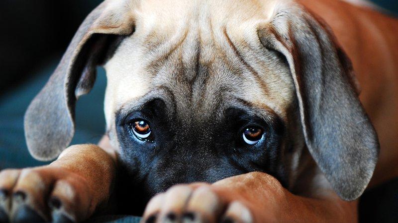 Human puppy