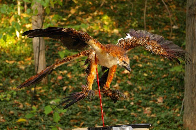 Model of microraptor in flight