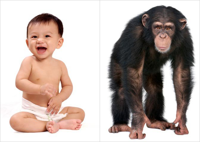 baby human and chimp