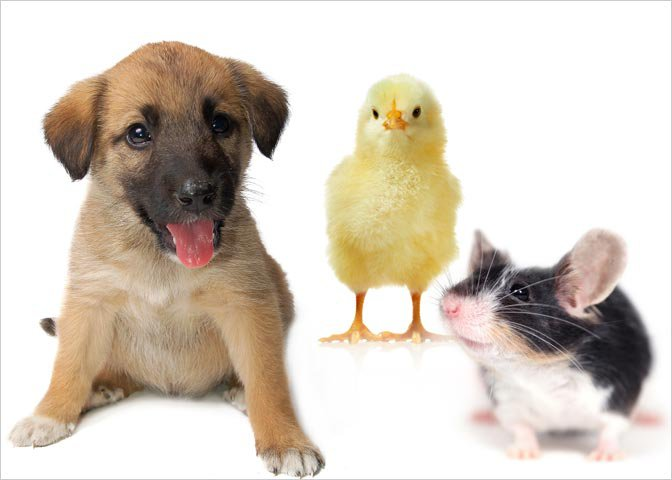 montage of chick, puppy, mouse