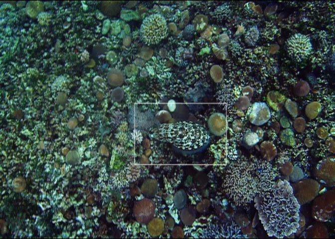 cuttlefish on sea floor