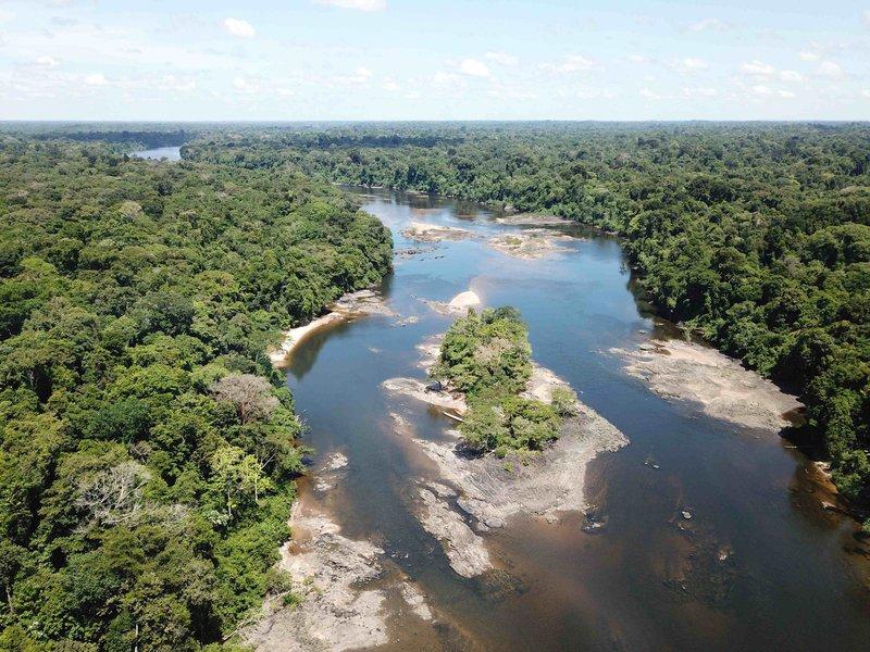 4A - Carlos David de Santana - Aerial view_typical electric eel Upland habitat_Coppename River_Suriname Picture by de Santana.jpeg