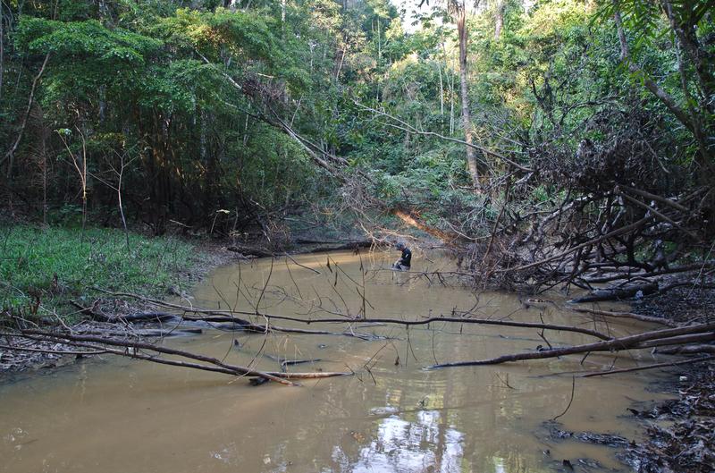 4B - Carlos David de Santana - typical electric eel Lowland habitat Picture by D. Bastos.png