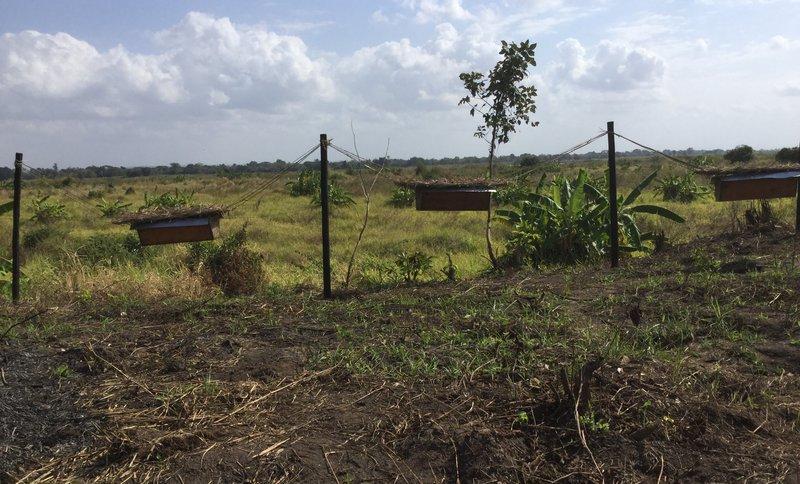 Beehives strung between fence posts