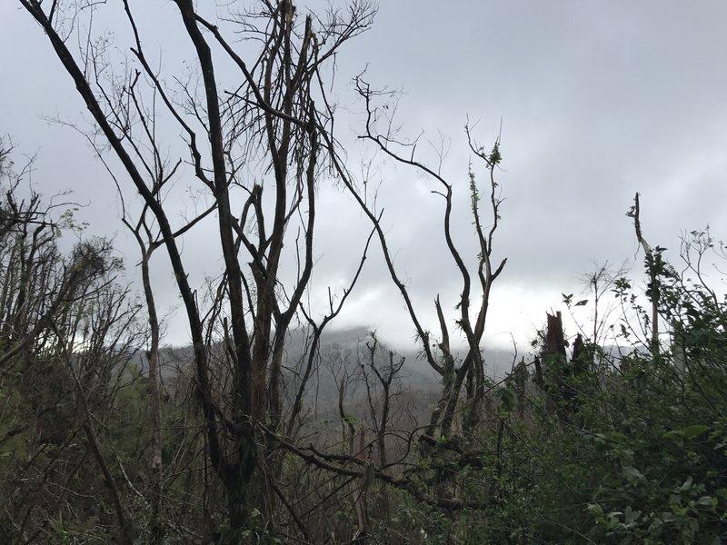 Fallen_trees_at_El_Yunque_(37123540773).jpg
