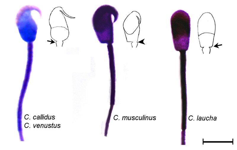 Figure 2.tif