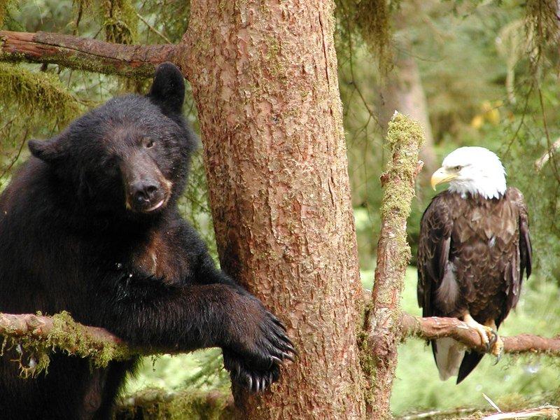 Forest Service Alaska Region.jpg