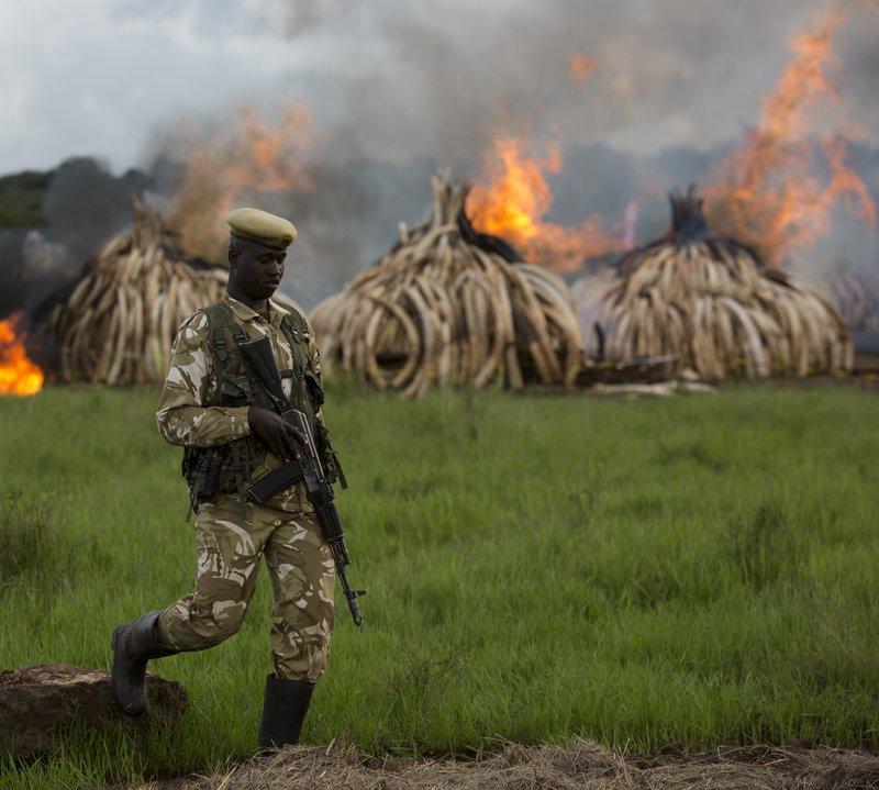 Illegal ivory burned - IFAW.jpg