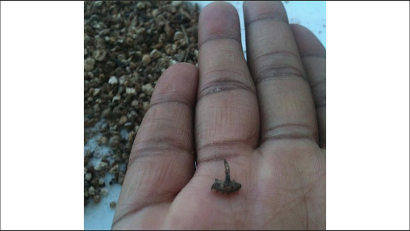 A tiny lizard jaw fossil in a person's hand.