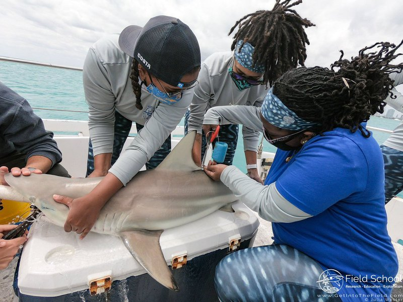 MISS Co-founders Amani Webber-Schultz and Jaida Elcock restrain a blacktip shark to take a fin sample