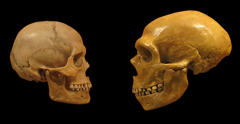 Sapiens_neanderthal_comparison_en_blackbackground.png