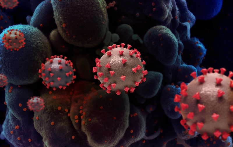 Spherical virus particles
