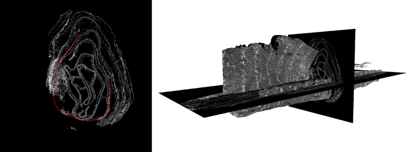 computerized tomography scan of the En-Gedi scroll showing a slice