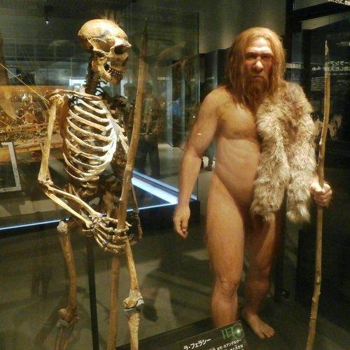Skeleton_and_restoration_model_of_Neanderthal_La_Ferrassie_1.jpg