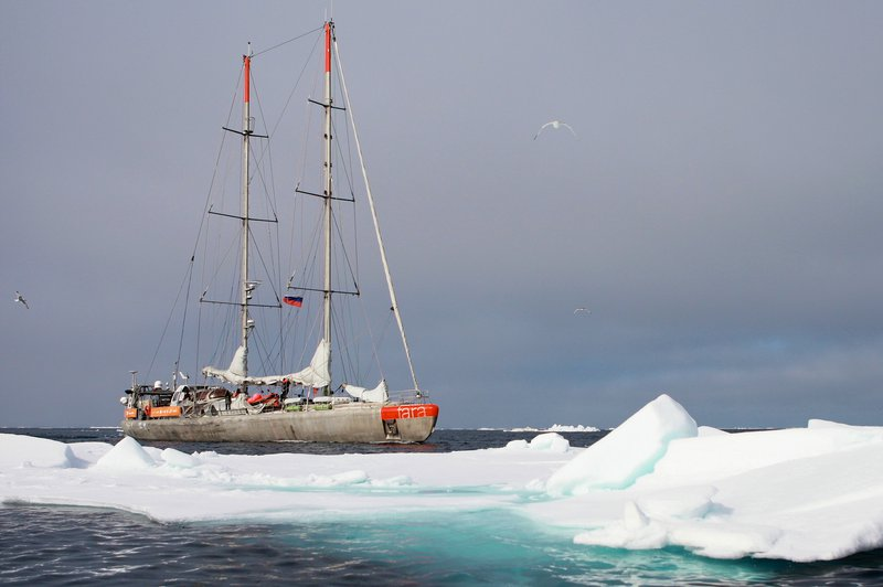 This image shows the Tara sailing on its Polar Circle expedition in 2013 CREDIT A. Deniaud Garcia - Fondation Tara Ocean.jpg
