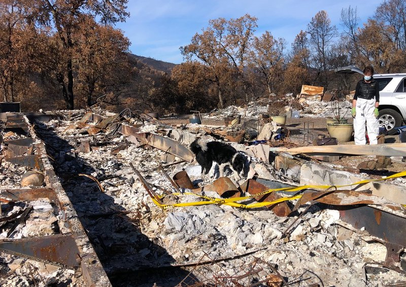 Border collie searches burned out home