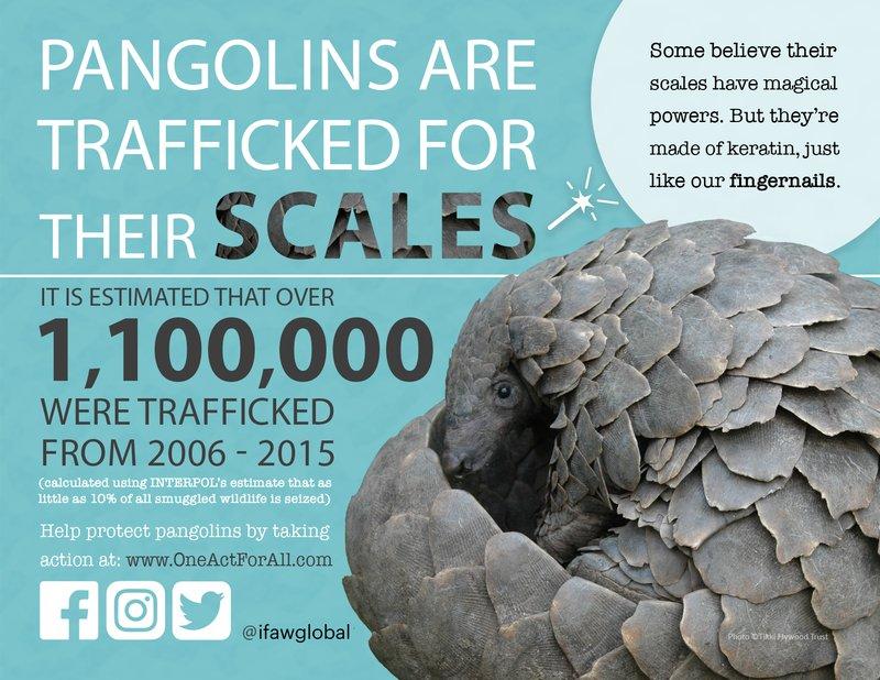 Updated Pangolin Graphic .jpg