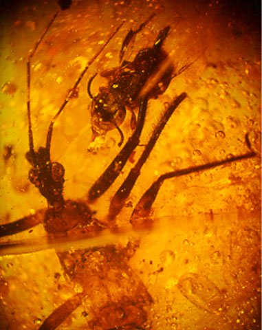 Resin bug