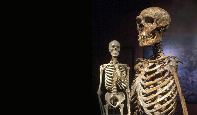 Neanderthal & human skeletons