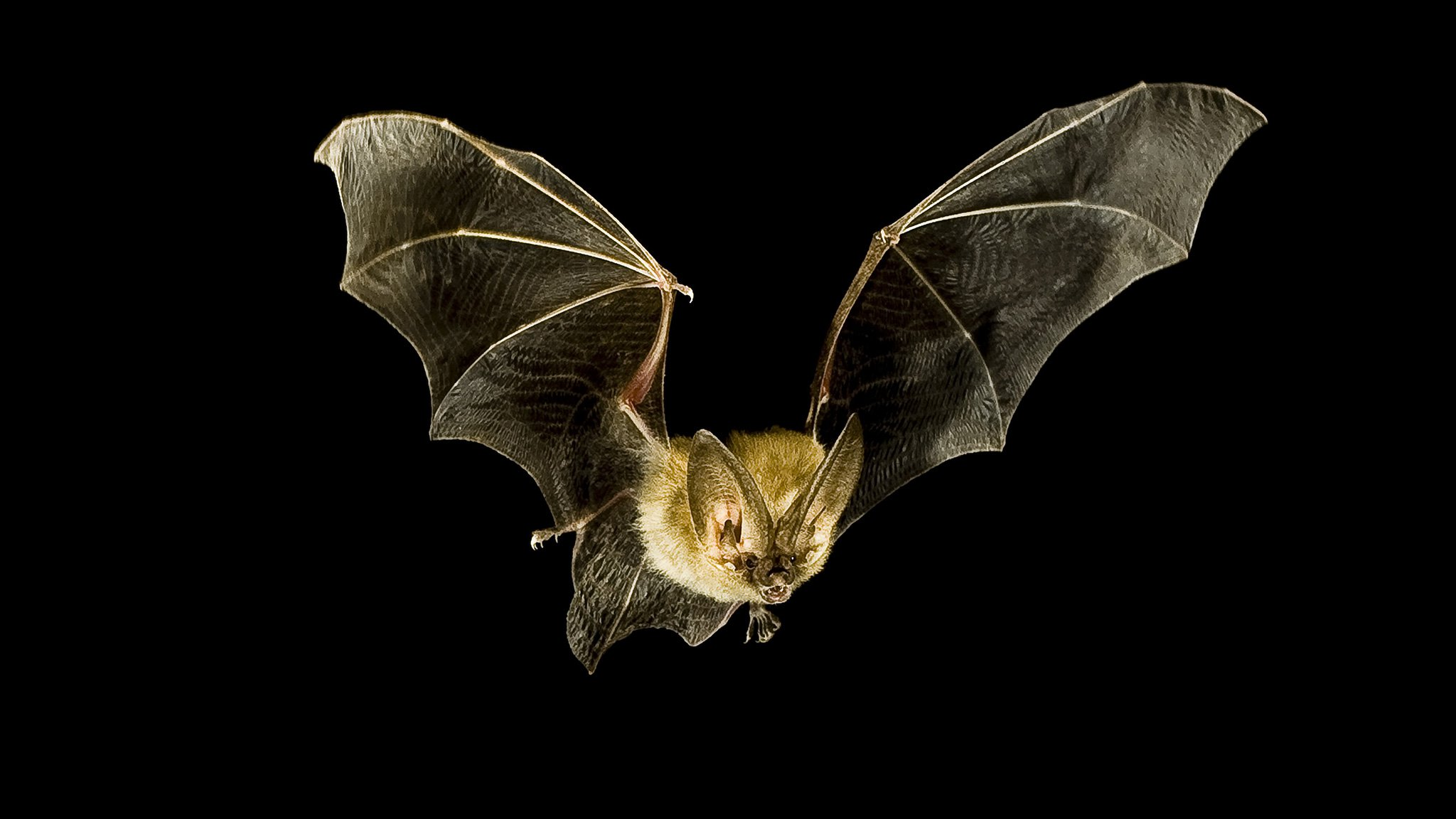 Bat Inspired Tech Could Help Blind People See With Sound