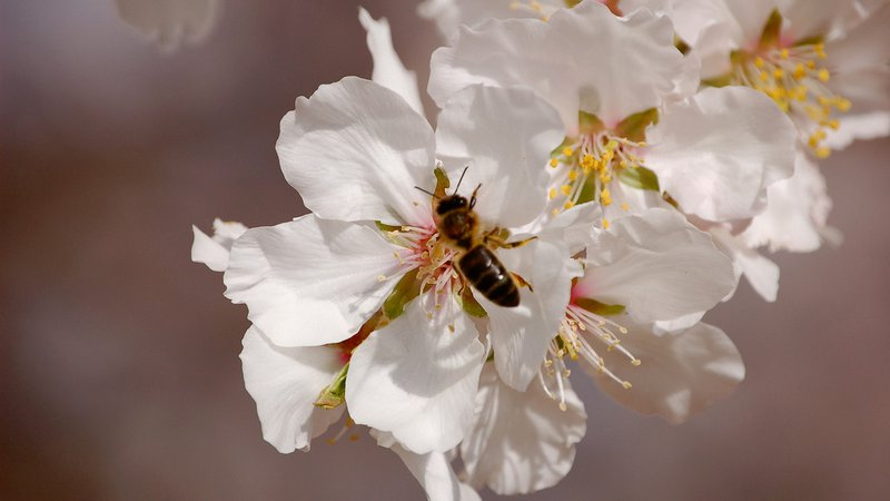 bees-pollinating_1024x576
