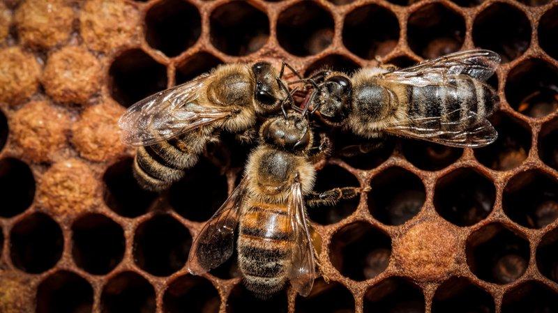 bees_honeycomb