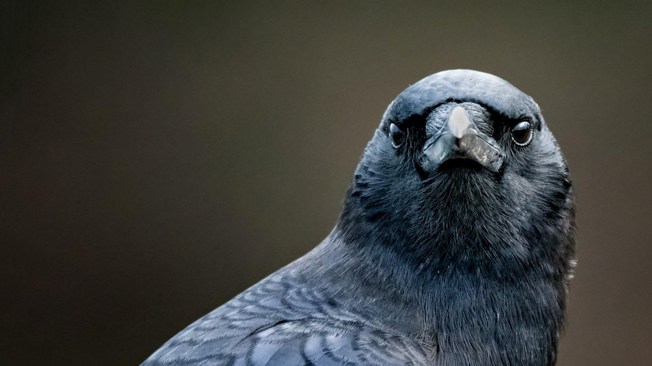 Bird Brain   NOVA   PBS