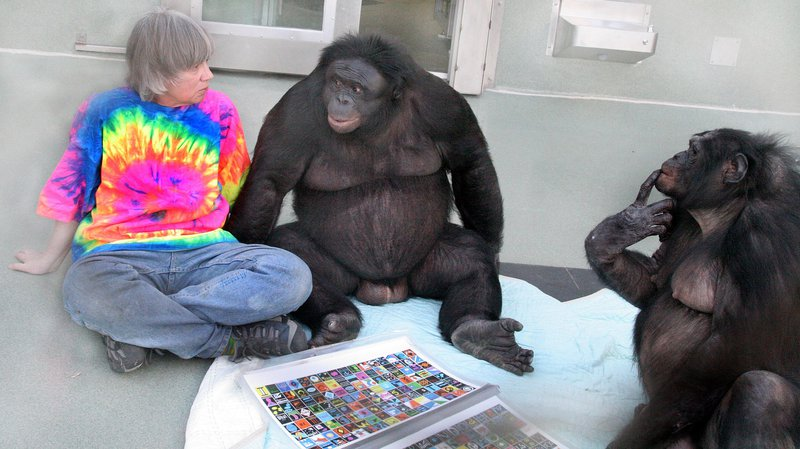 bonobo_2048x1152