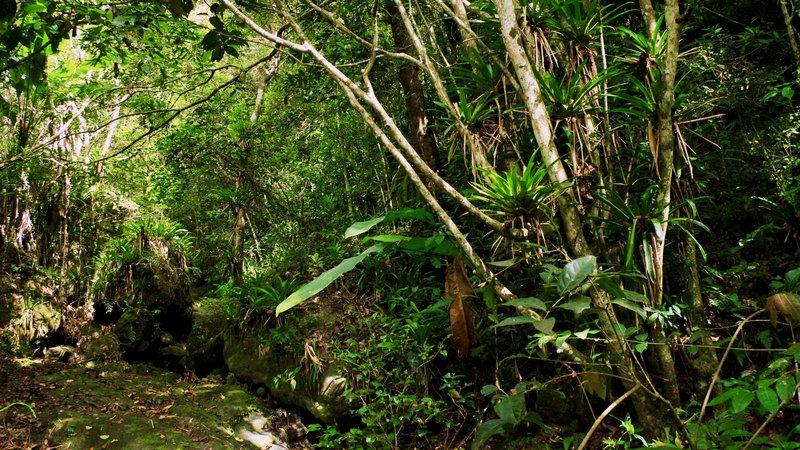 Bromeliad Paradise