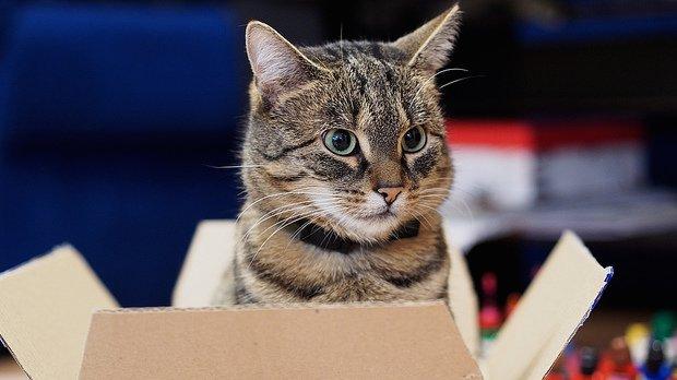 cat_620