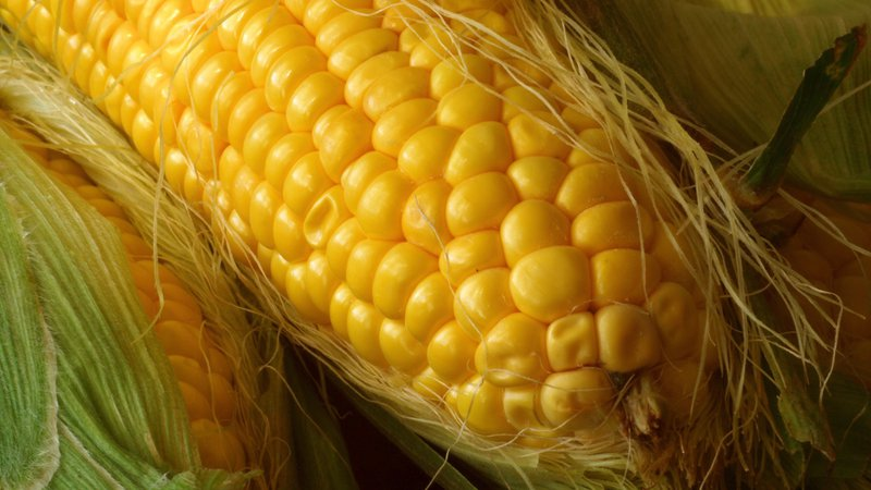 GMO Crops Have an Unintended Side-Effect: Protecting Non