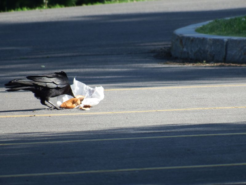 crow burger 2.JPG
