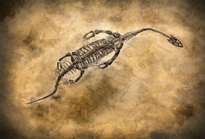 marine reptile fossil