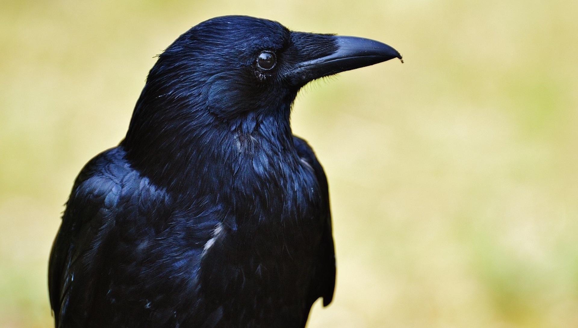Bird Brain | NOVA | PBS