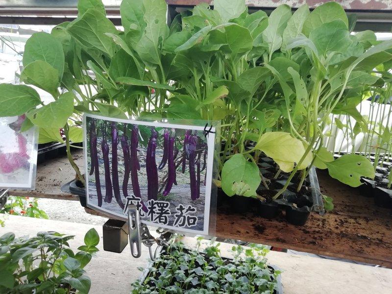 eggplant-1.jpeg